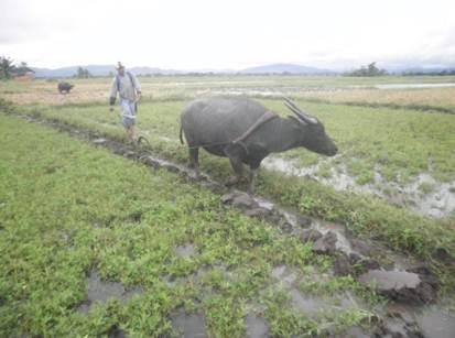 フィリピンにおける農業・食糧問題
