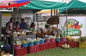 フィリピン:有機・減農薬農産物のアグリビジネス(SILFOR)(2015年終了)
